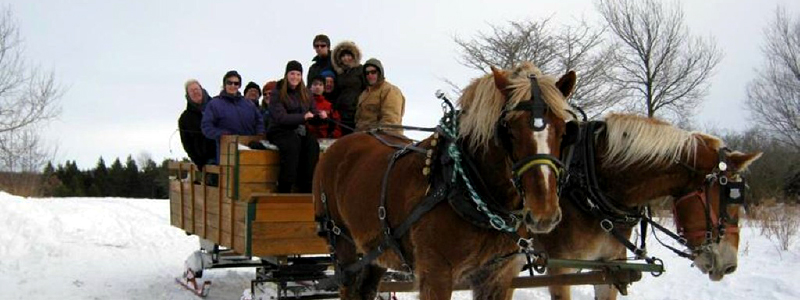 Photo of Hay and Sleigh Rides 13