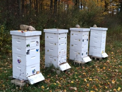 Complete hives with 2 deeps and 2 supers
