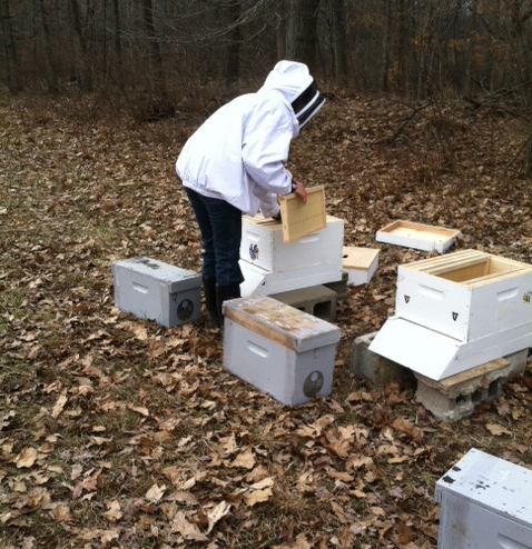 Four Green Fields Farm beekeeper placing nucs in the hives