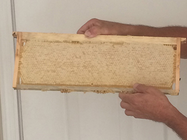 """A super frame full of """"capped"""" honey prior to putting it in the extractor"""