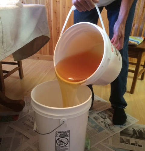 Honey being poured into a bottling bucket after being collected from the extractor